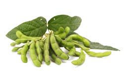 beans-magrush
