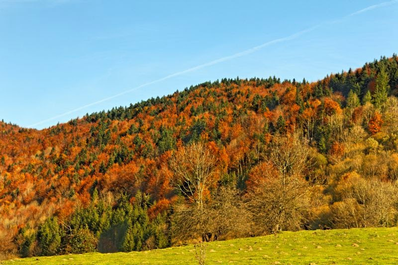 arbre-ecologie-habitat-poumon-vert