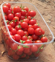 Tomate cherry la Regadera Verde