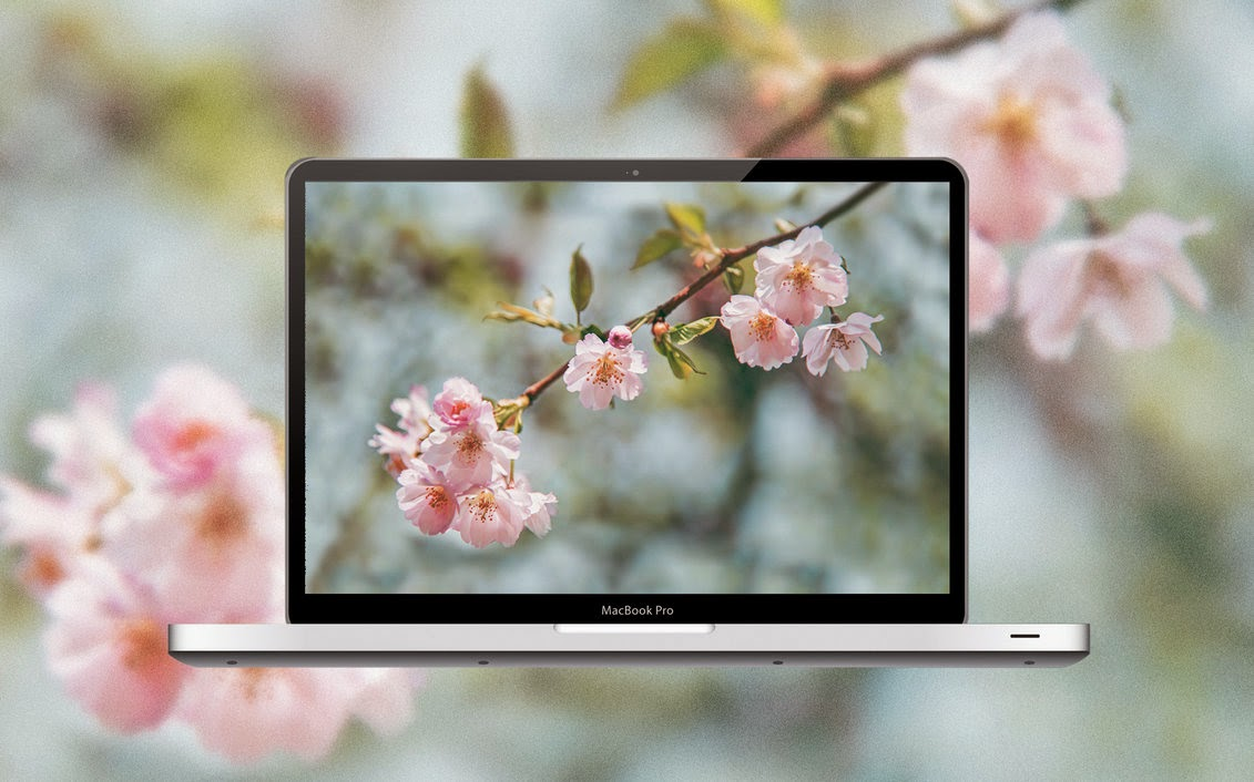 Cherry Blossom Free Wallpaper