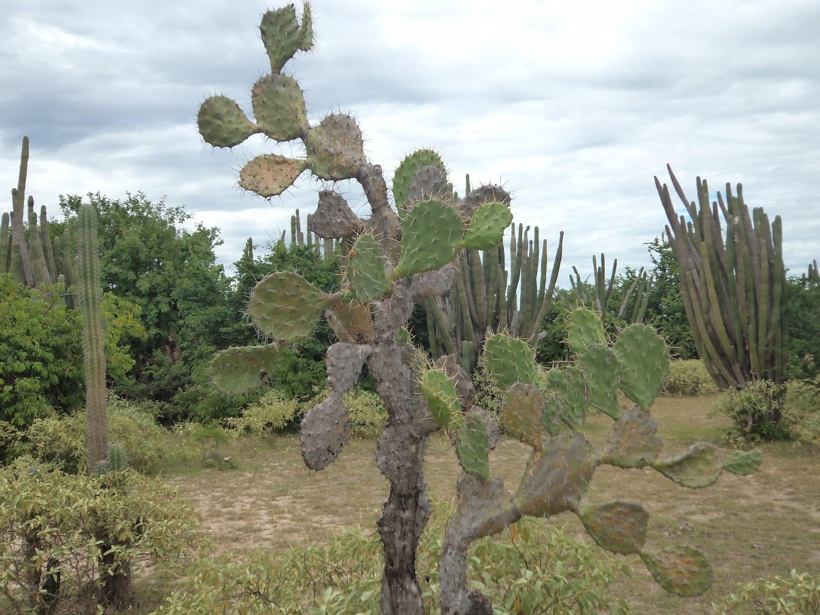 BosqueTropical Seco y muy Seco La Tatacoa Cactus Plantas del