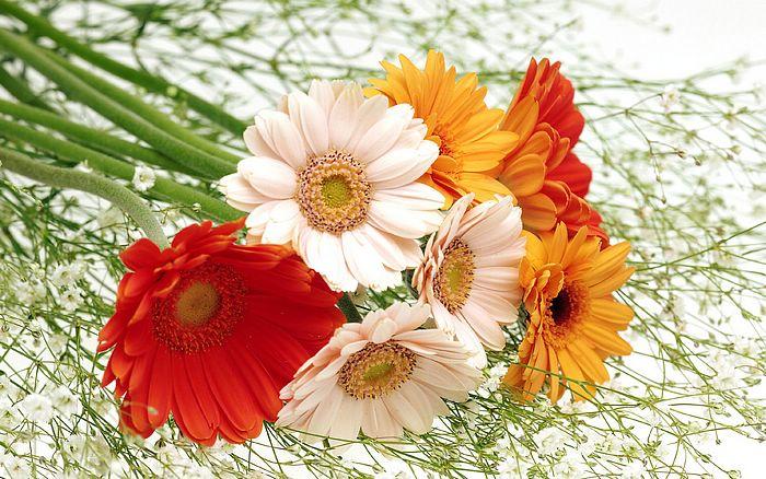 மீனு தரும் இயற்கை அழகு அன்பு மலர்கள்........ Harmony+Ikebana+flowers