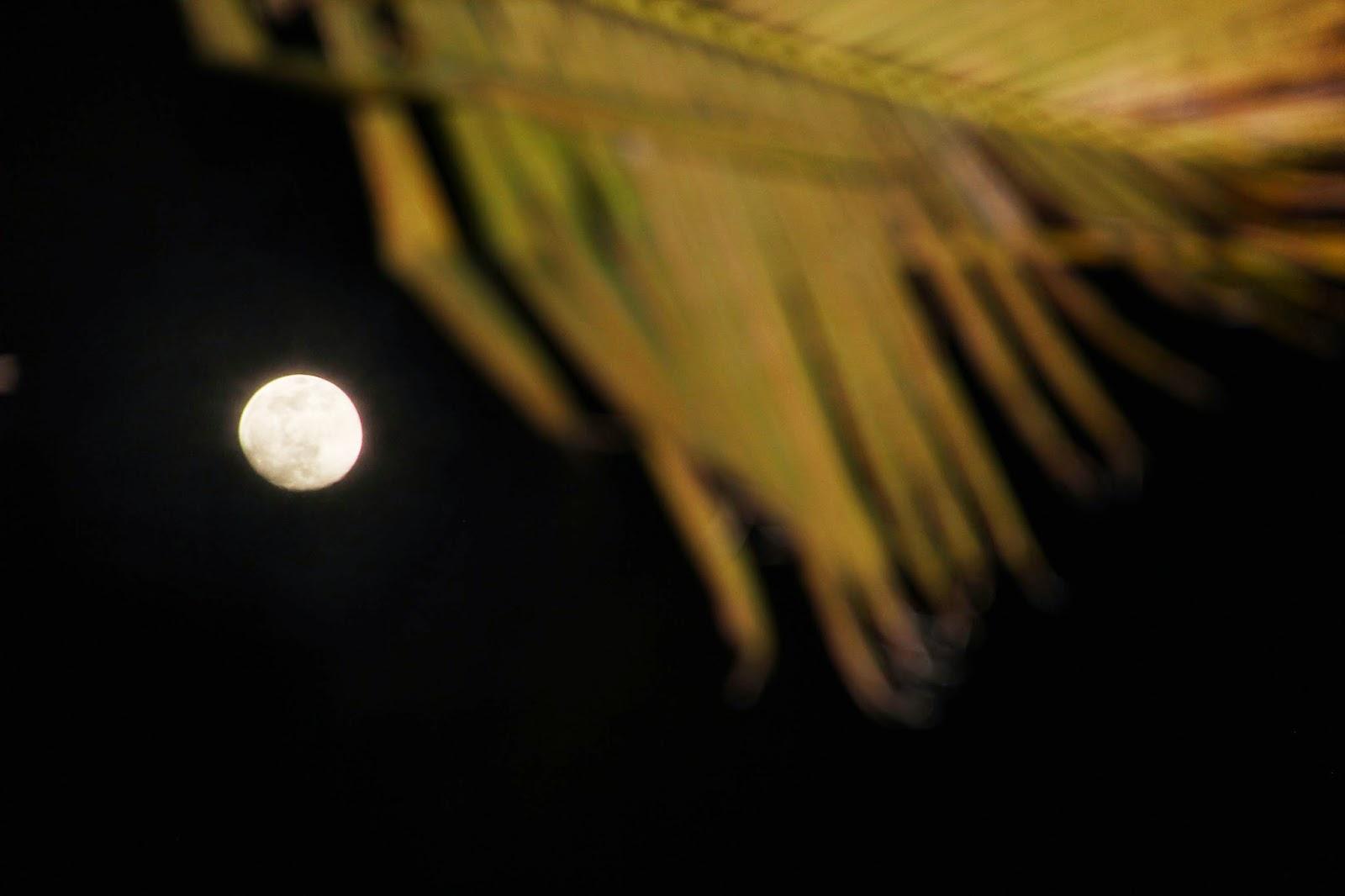 Islamorada Full Moon Party