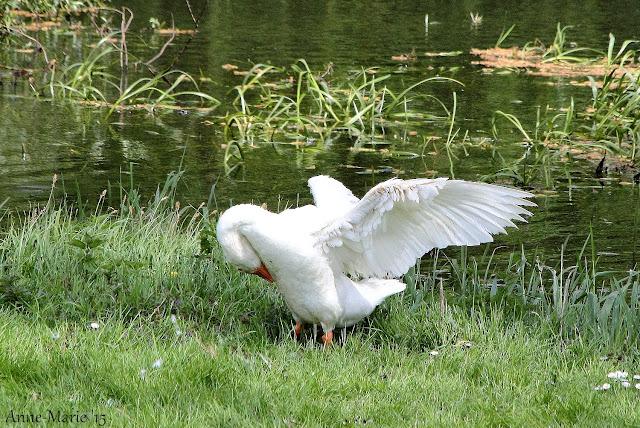 http://puurnatuur-foto.blogspot.nl