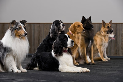 which-are-the-best-dog-breeds-for-children