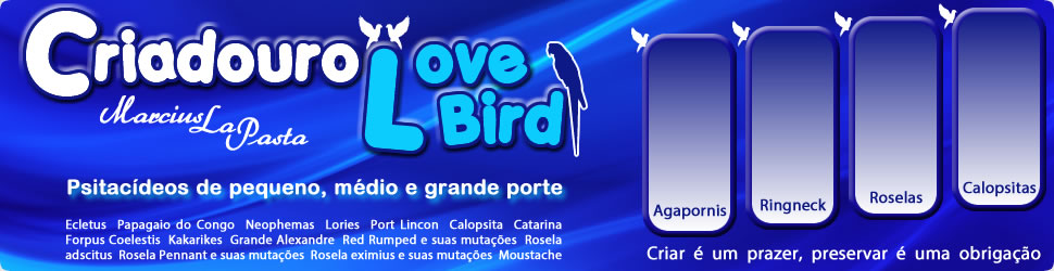 Criadouro Love Birds
