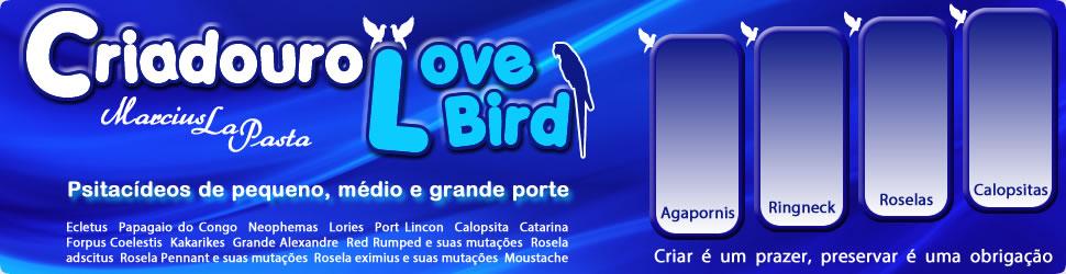 Criadouro Love Birds