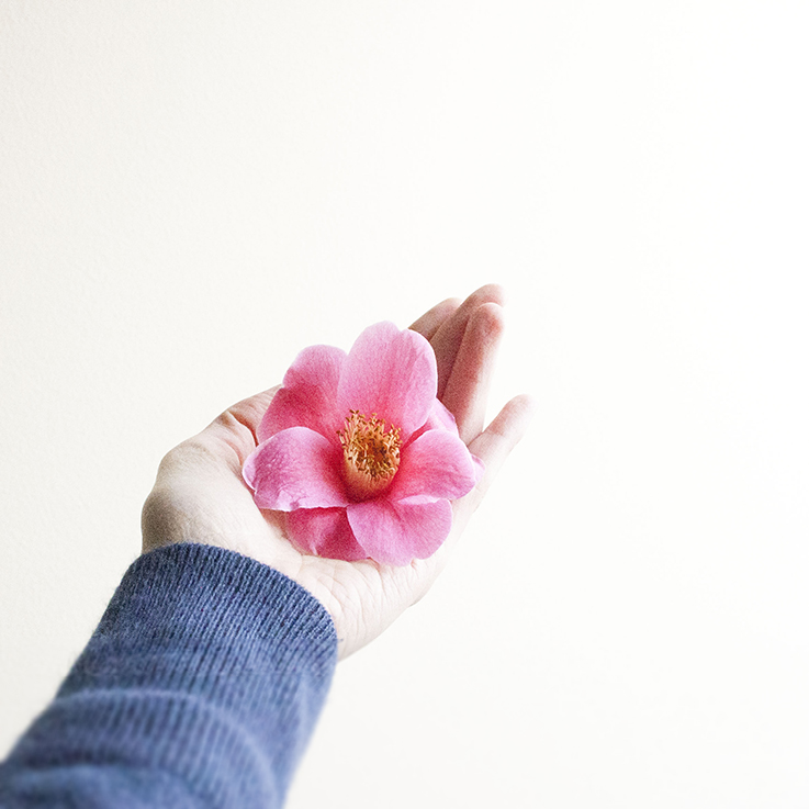 pink flower held in a hand