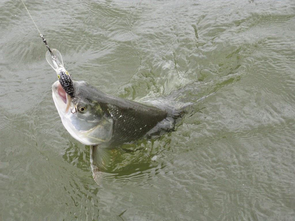 все о рыбных снастях в казани