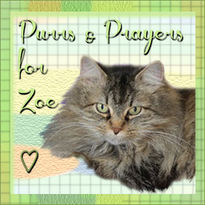 Purrs and Prayers for Sister Zoe