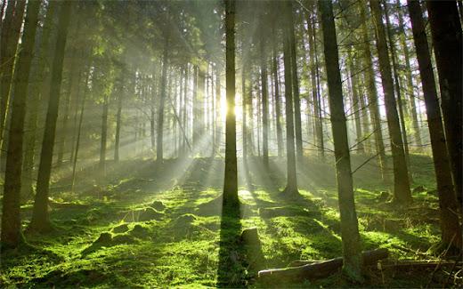 A Oriflame respeita o Meio Ambiente