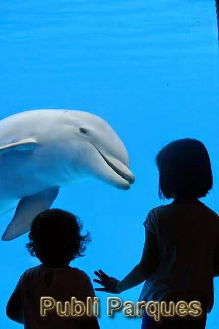 Delfines en Mundomar