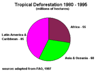 Brazilian Amazon Rainforest Deforestation