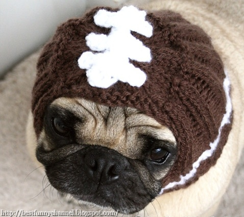 funny dog in a knitted hat.