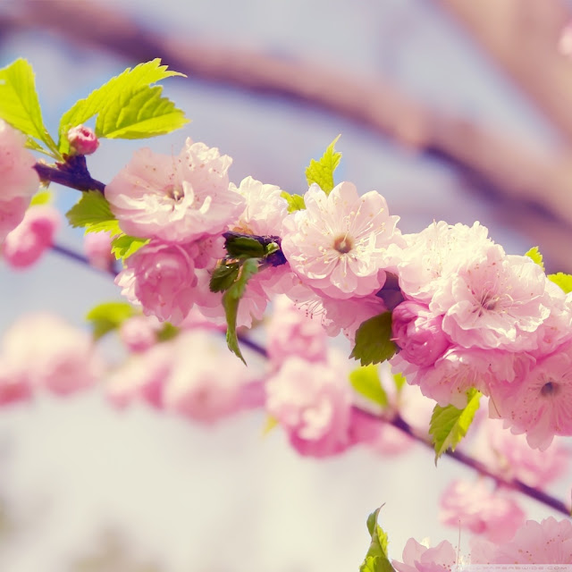 spring ipad wallpaper 10