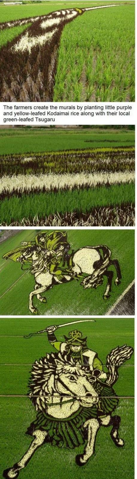 gambar lukisan di sawah padi jepun