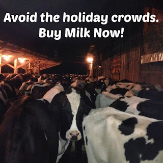 dairy cows buy milk now