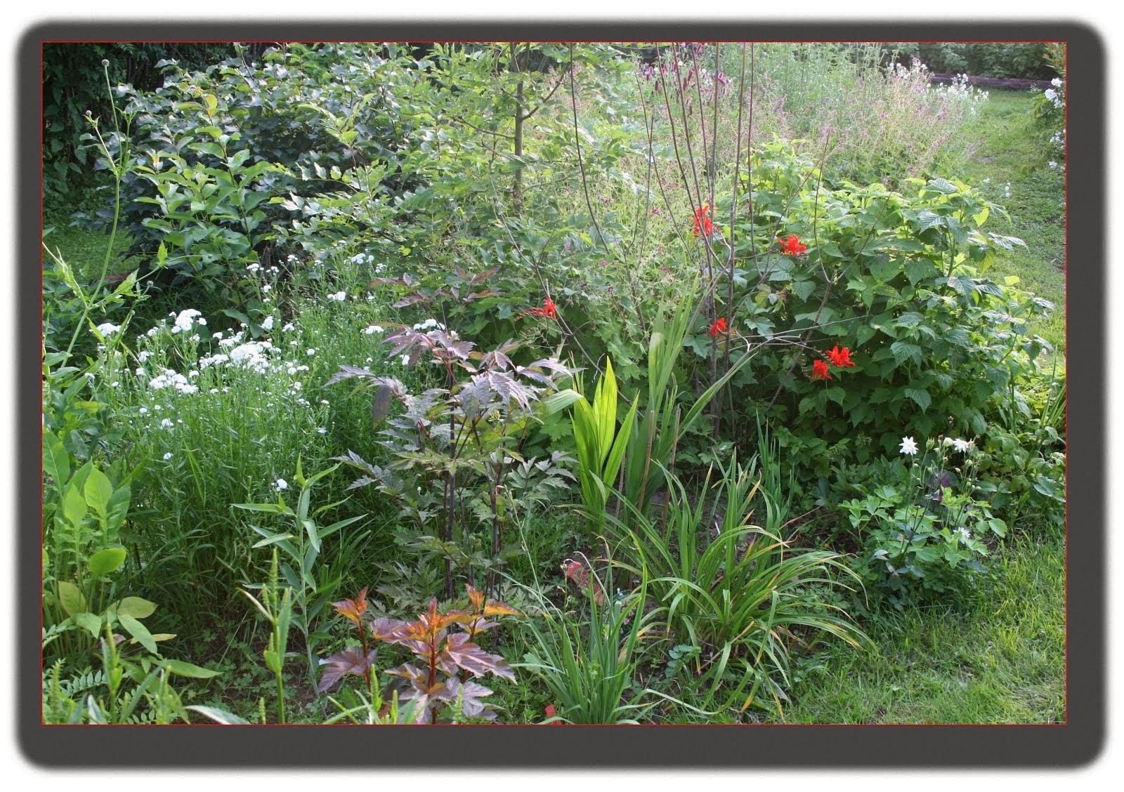 Blommor i min trädgård