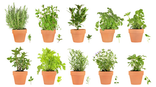 live, life, love and laughter making a herb garden, Natural flower