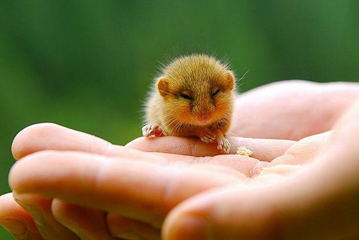 Nos petits freres les animaux quand les animaux dorment - Des animaux trop mignon ...