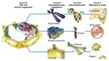 bio molecules Biomolecules lab report jordan griffin elizabeth barnhardt alexis mcdonald hannah mac hypothesis: background information: chart: key terms: conclusion: materials: for this lab you have to know the materials and how to preform each test.