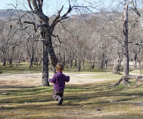 http://www.elmundoecologico.es/espacio-terrativa/1215-el-trastorno-por-deficit-de-naturaleza.html