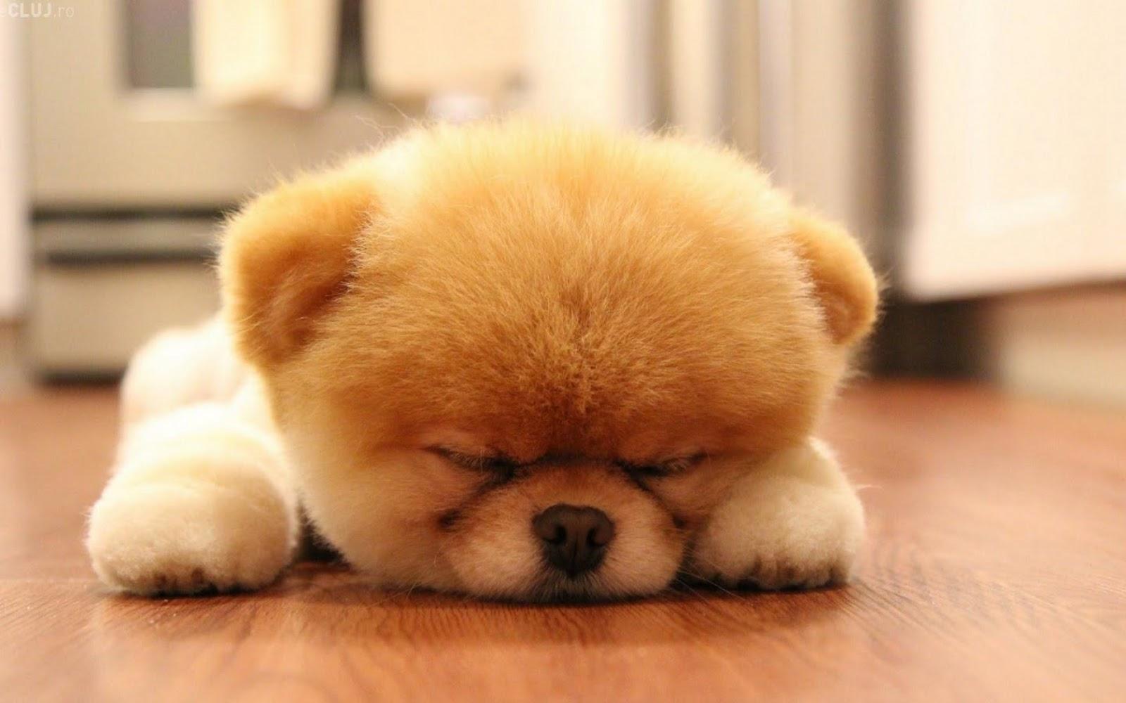 Pic New Posts Boo Dog Wallpaper Hd