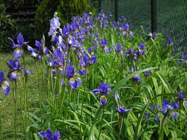 Markuševec: Podsljemenski vrtovi