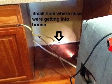 Mice in the dishwasher