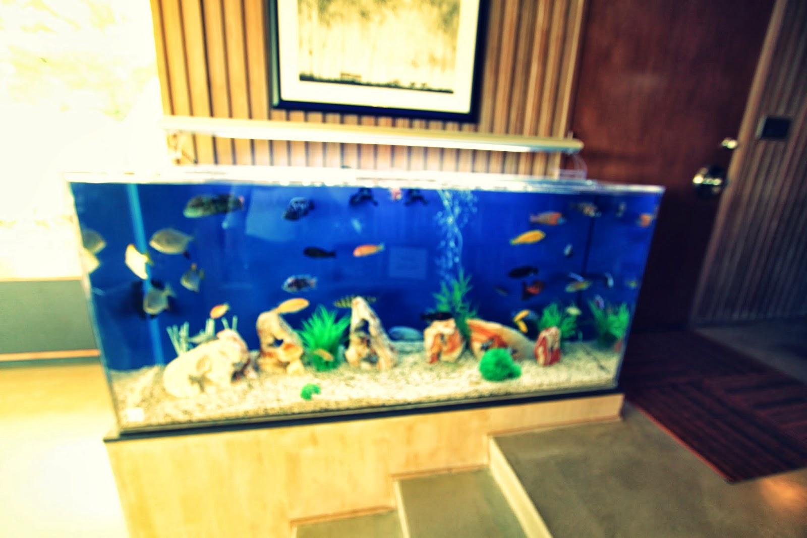 Pasadena modern tour zook house 1950 harold b zook for Floor fish tank