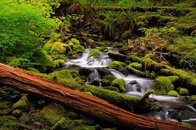 Así de suave desciende el río junto a la casa de campo