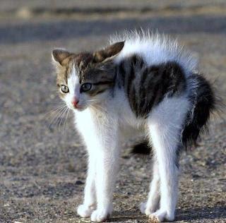 10 Fakta Menarik Tentang Kucing