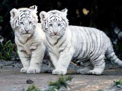 living little 4eva cute baby animals