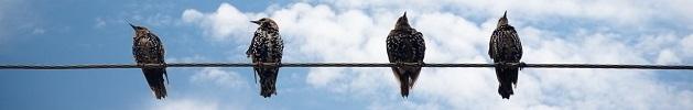 ΑΠΟΔΗΜΟΣ ΕΛΛΗΝΙΣΜΟΣ: Ως αποδημητικά πουλιά.....