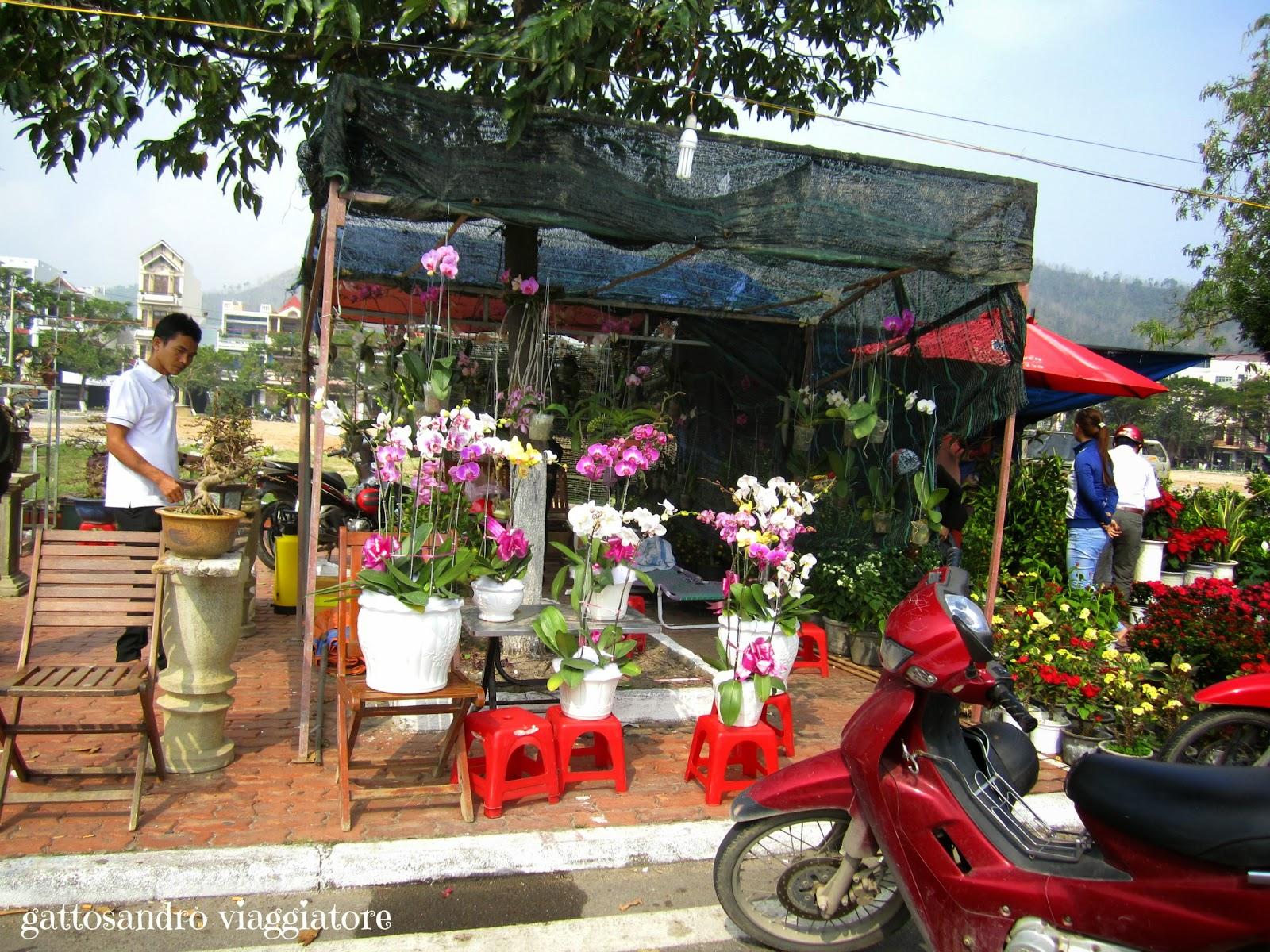 Qui Nhon - fiori per il Tết