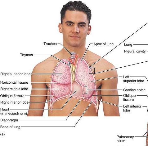 Medical Star99.blogspot.com: Location, Relation and Structure - Part 2