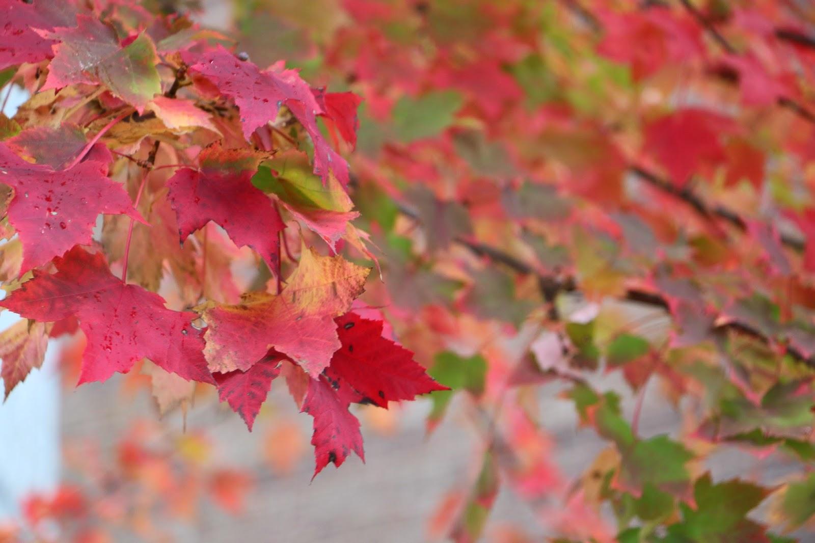 """Les Feuilles d'Automne...The Fall Leavess'-1c Photo Shahrzad Ghaffari MVM- 21 OCT 2014"