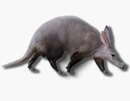 aardvark mammal