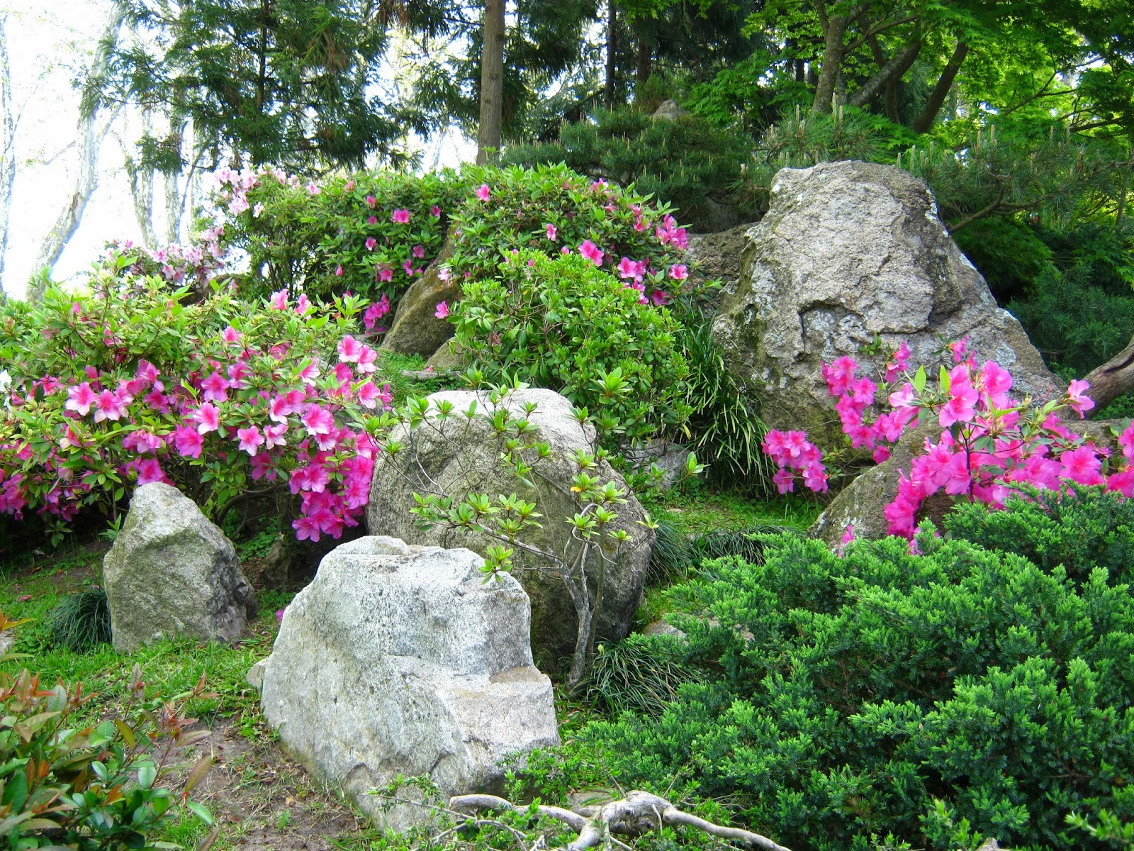 Uruguay pictures the japanese garden of montevideo for Jardin japones