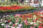 Garden La Rasa
