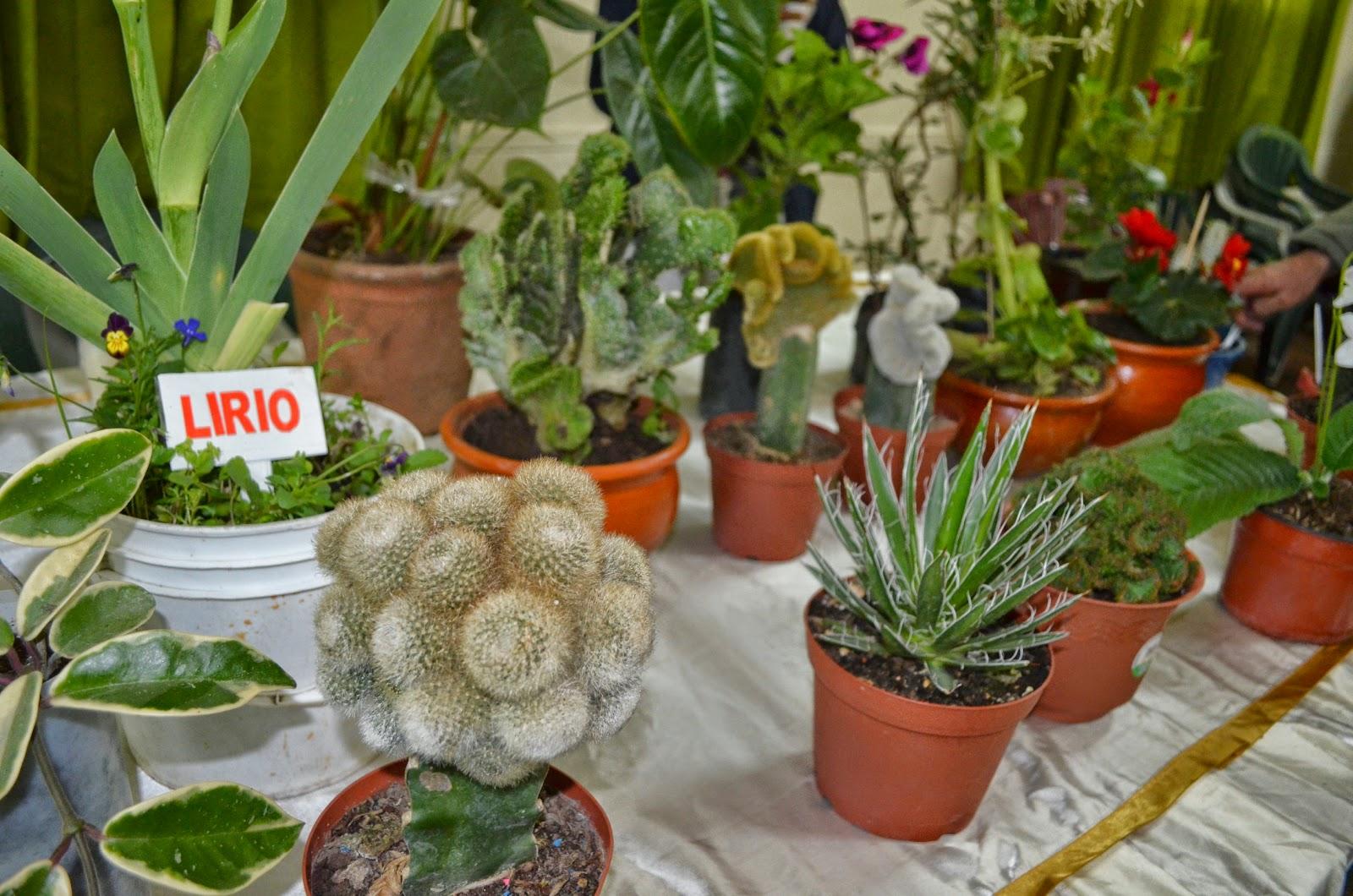 Group 10 notic as huancayo festival de plantas for Que significa plantas ornamentales