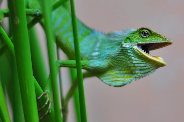 Wacana Biodiversitas dalam Sudut  Pandang Antropologi