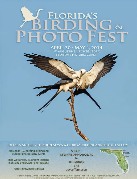 Birding and Photo Festival, Gamble Rogers Festival, Chalk Walk Festival and More This Week in St Augustine! 1 St. Francis Inn St. Augustine Bed and Breakfast