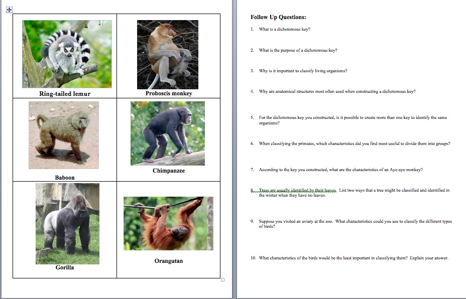 Amy Brown Science Teach Classification and Make It Fun – Dichotomous Key Worksheet