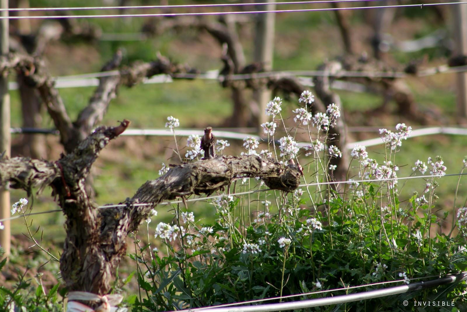 Invisible SLG Photos: El color de las viñas en Febrero