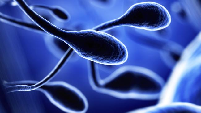 Scientists create human sperm in a lab