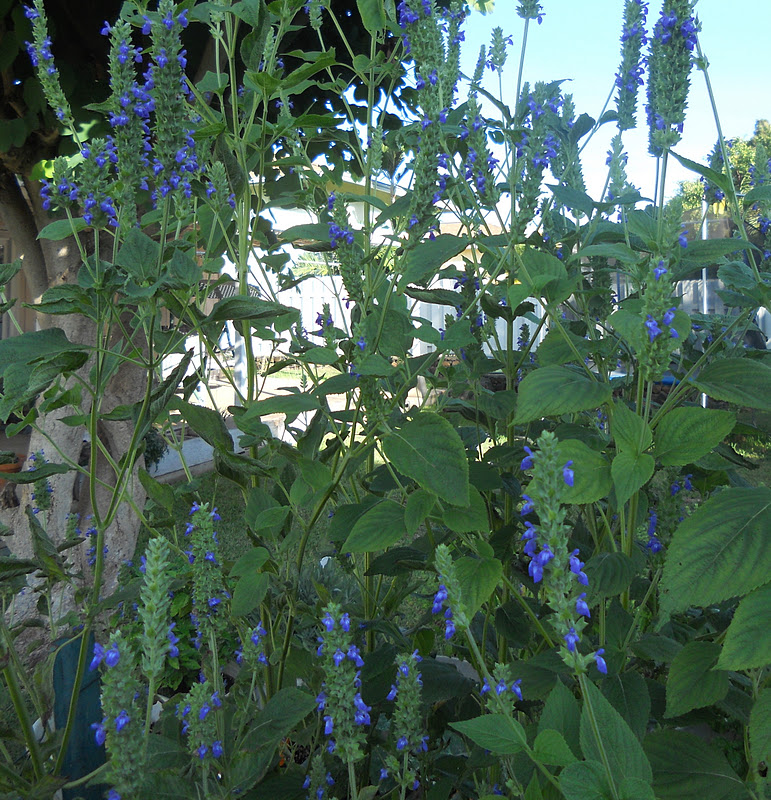 Kitchen Garden in Kihei Maui: Growing Culinary Herbs & Seeds - A to ...