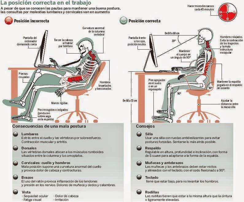 Anatom a de la columna vertebral higiene postural y ergonomia for Ergonomia en el trabajo de oficina