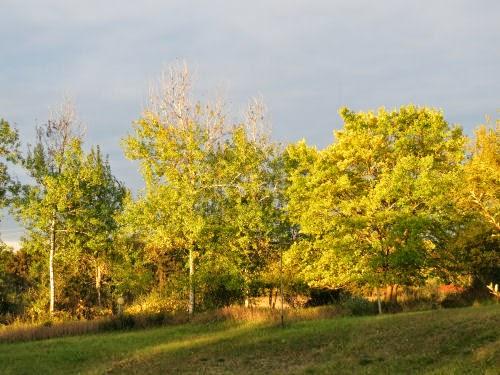 sun on trees