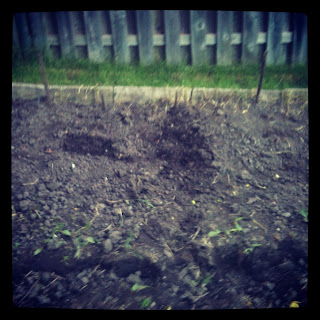 Veggies Planted